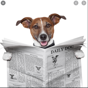The Dog News, Episode 2